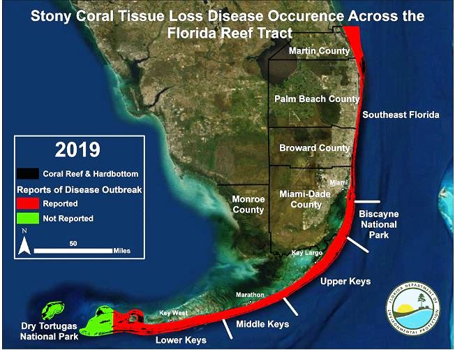 Map Of Coral Reefs In Florida Deadly coral disease has spread through Great Florida Reef