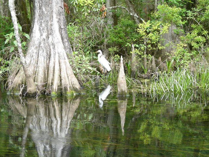 Wakulla springs 2009 05 04T19 41 30 In: Why Florida's DEP stands for Delayed Environmental Protection | Our Santa Fe River, Inc. | Protecting the Santa Fe River in North Florida