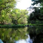 WekiwaSprings In: Why Florida's DEP stands for Delayed Environmental Protection | Our Santa Fe River, Inc. | Protecting the Santa Fe River in North Florida